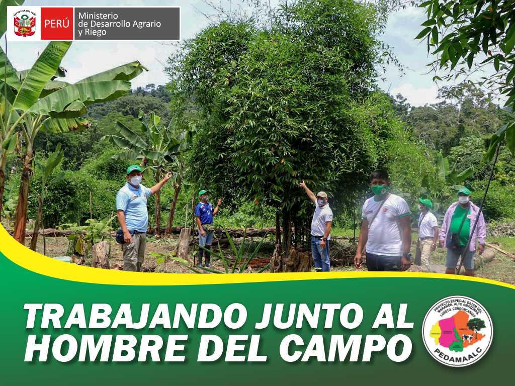 PROYECTO BAMBÚ EN CONDORCANQUI AMAZONAS CONTRIBUYENDO AL CUIDADO DEL MEDIO AMBIENTE Y EL DESARROLLO PRODUCTIVO EN TERRITORIO AWAJÚN