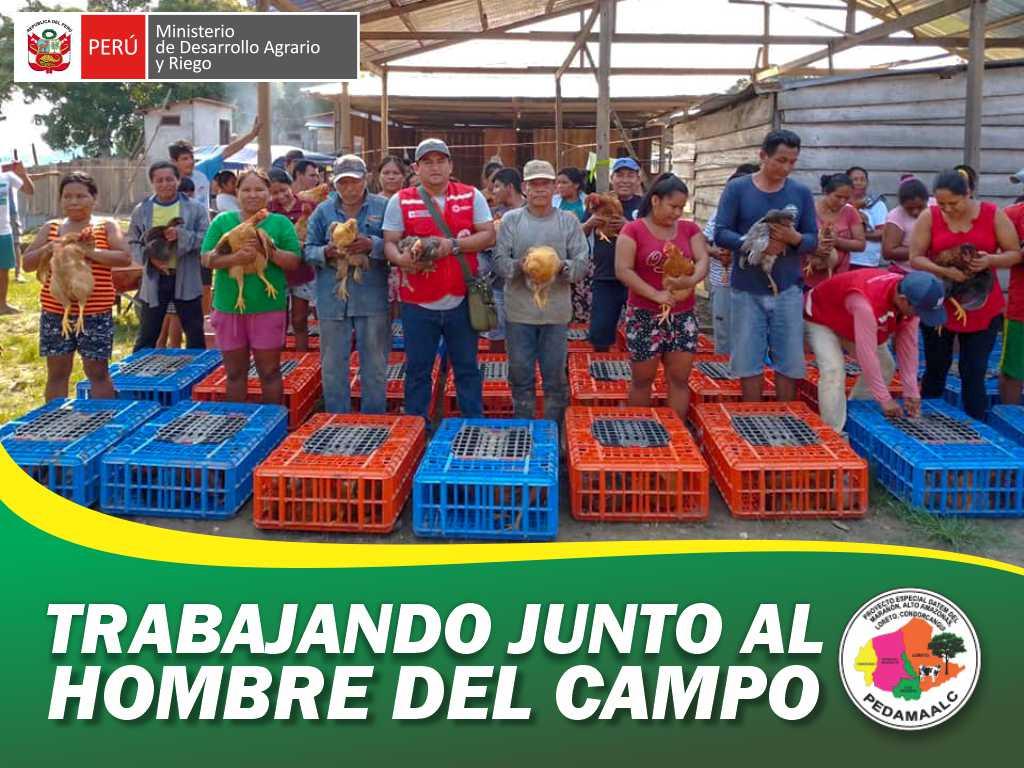 PROYECTO GALLINAS URARINAS ENTREGO 4000,00 AVES A 400 FAMILIAS BENEFICIARIAS