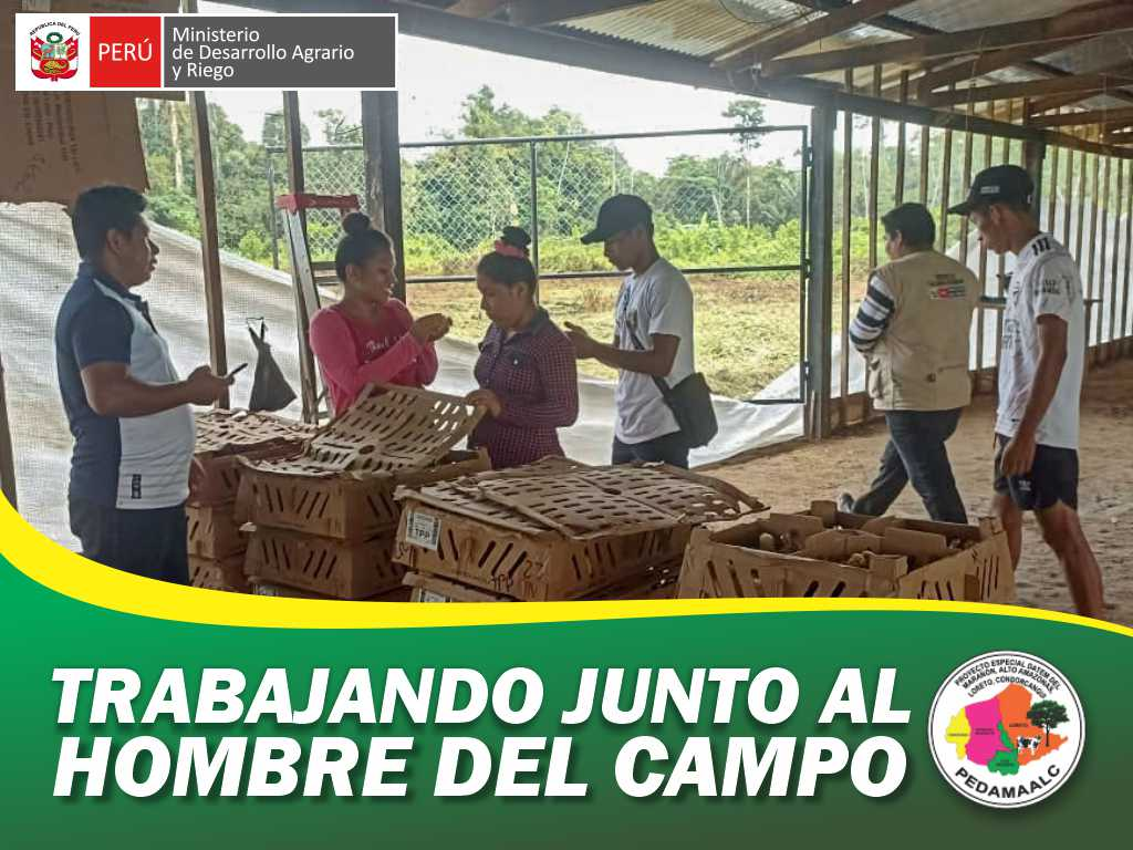PROYECTO GALLINAS MEJORADAS PARINARI DIO INICIO TERCERA CAMPAÑA DE CRIANZA DE AVES