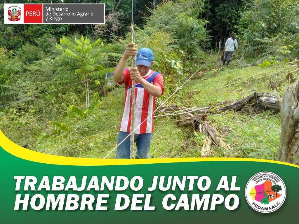 PROYECTO RECUPERACIÓN DE SUELOS DEGRADADOS EN 7 CASERÍOS DEL EJE CARRETERO YURIMAGUAS - TARAPOTO INICIO SU TRABAJO DE REFORESTACIÓN
