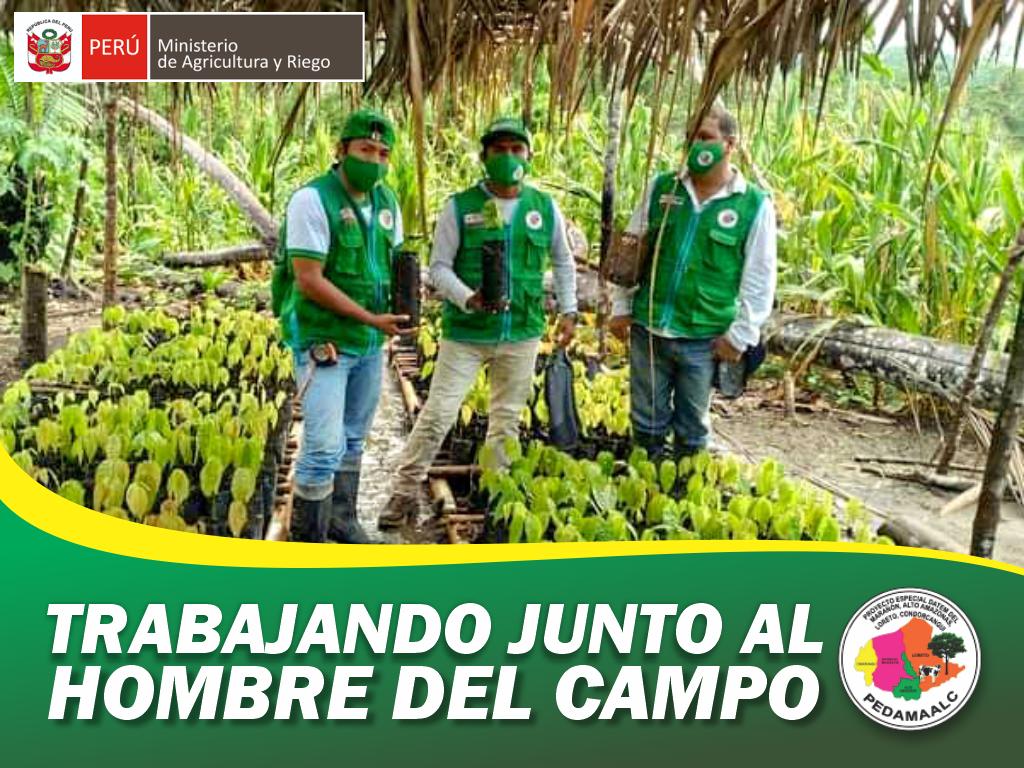 PROYECTO CACAO EN EL CENEPA CAMINO HACIA EL DESARROLLO PRODUCTIVO DE NUESTROS HERMANOS AWAJÚN