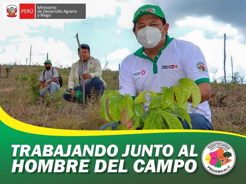 PROYECTO REFORESTACION EN 7 CASERIOS DEL EJE CARRETERO  OPTIMO DESARROLLO DE PLANTACIONES FORESTALES CAMPO DEFINITIVO