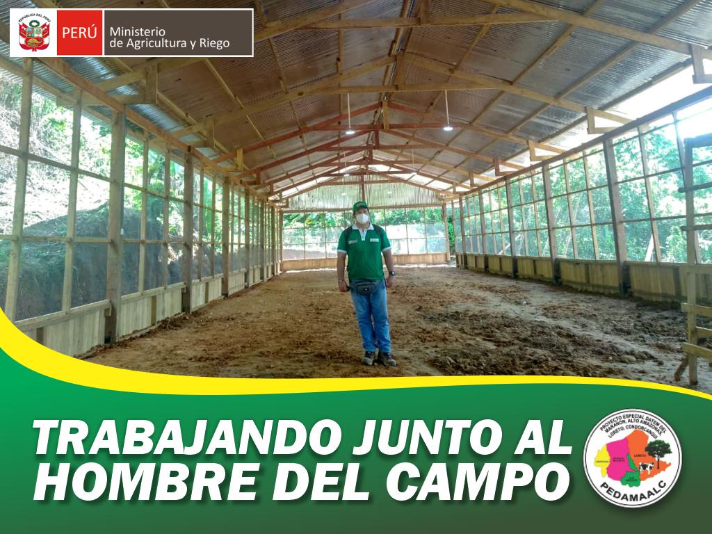PROYECTO MEJORAMIENTO DE GALLINAS CRIOLLAS MEJORADAS EN CONDORCANQUI AMAZONAS  CONCLUIMOS LA CONSTRUCCIÓN DEL SEGUNDO GALPÓN EN LA COMUNIDAD DE CIRO ALEGRÍA