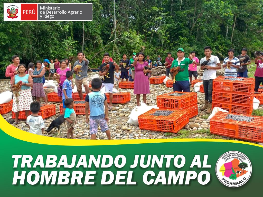 PROYECTO CRIANZA DE GALLINAS CRIOLLAS MEJORADAS EN CONDORCANQUI - AMAZONAS CONSOLIDANDO LA SEGURIDAD ALIMENTARIA EN LOS PUEBLOS AWAJÚN